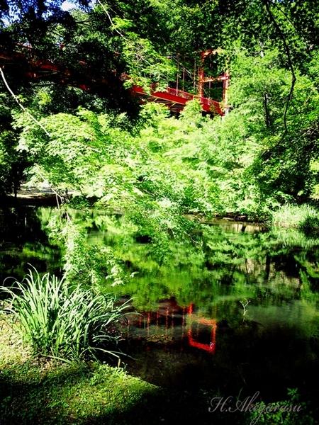 11★池に移る吊り橋とイロハモミジ.jpg