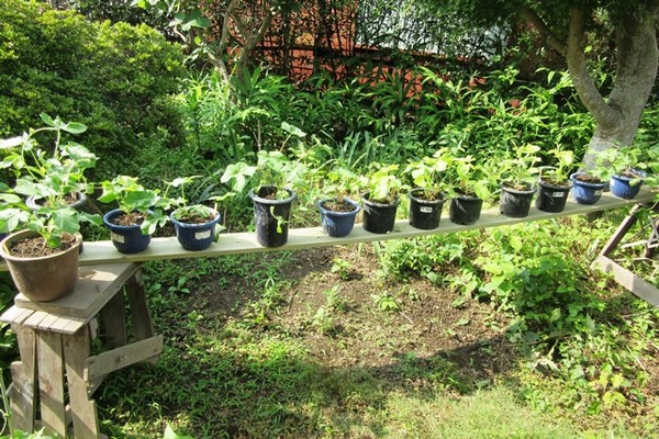 2015.7.11blog ★二宮庭園の鉢植え棚4.JPG