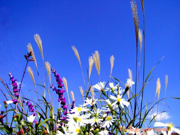 ★★■SSS秋の草花のコピー.jpg