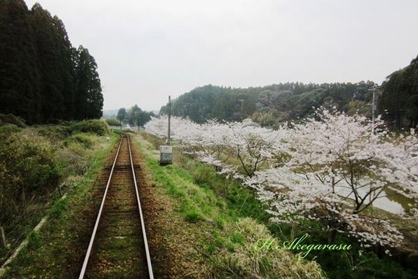 夷隅鉄道沿線.JPG