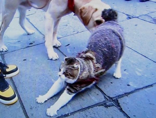 犬大好き .JPG