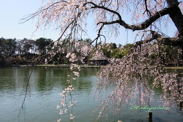 6.千葉公園1.jpg