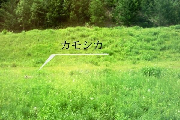 IMG_3096★.jpg