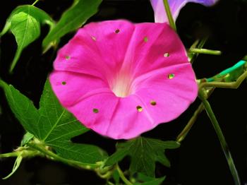 こんな花が.jpg