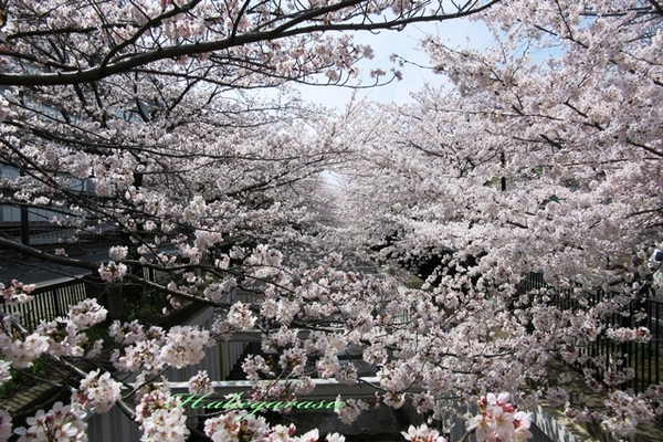 9.草野水路1.JPG