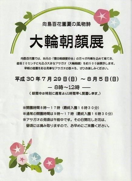 S★向島百花園 大輪朝顔展1.jpg